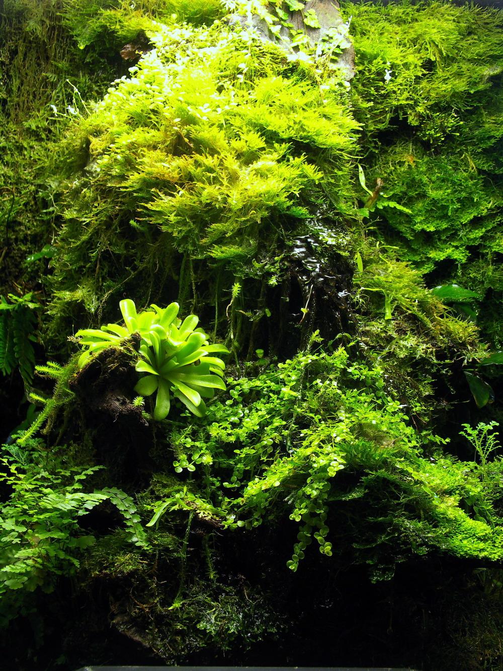Как вырастить мох в доме 20